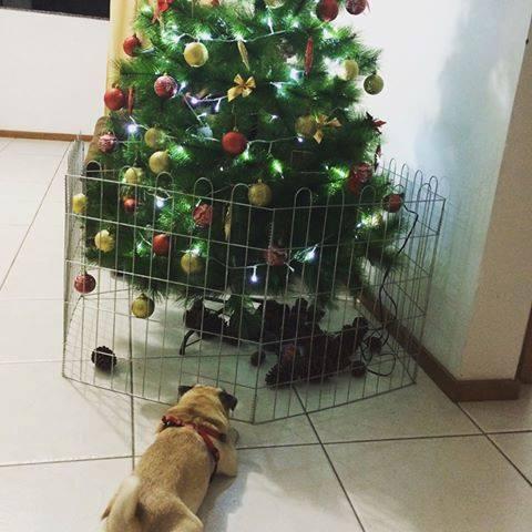 árvore de natal segura