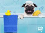 escolher o melhor Pet Shop